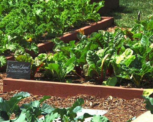 ヤマダタッケンと家庭菜園